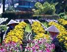 Ảnh: Cánh đồng hoa đẹp như tranh vẽ giữa Sài Gòn
