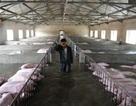 """Trung Quốc: Bức ảnh đàn lợn 6.000 con ngập trong lũ gây """"bão"""" mạng"""