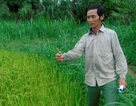 Thủy điện đồng ý xả nước cứu lúa