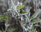 Mẫu Sơn - 2 độ C, băng giá phủ trắng