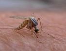 Vi rút Zika gây tật đầu nhỏ có thực sự đáng sợ?