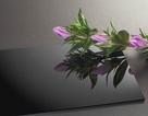 Phát triển nhựa sinh học dựa trên thực vật không ăn được