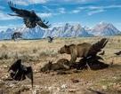 Những bức ảnh ấn tượng nhất 2016 do National Geographic bình chọn