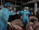 100% cơ sở chăn nuôi có dùng kháng sinh