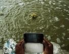 Tội phạm về môi trường tăng vọt 26% kể từ năm 2014
