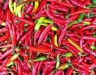 Bài học chiến thuật sales từ người... bán ớt