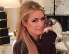 Paris Hilton khoe cún cưng nhỏ xíu 8 nghìn đô