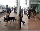 Điều ít biết về những chú chó nghiệp vụ Mỹ đi theo bảo vệ Tổng thống Mỹ