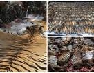 Những hình ảnh không thể tin nổi trong ngôi đền Hổ nổi tiếng ở Thái Lan