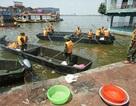 Ba Bộ cùng vào cuộc truy nguyên nhân cá Hồ Tây chết