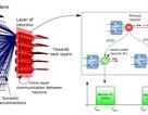 Thiết kế thành công một hệ thống điện toán mô phỏng não người