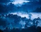 Một phần mười các vùng hoang dã đã biến mất kể từ năm 1990