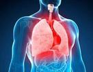 Có thể phát triển những lá phổi ở người có kích thước nhỏ bằng hạt đậu