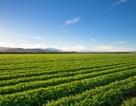 Đột phá trong nghiên cứu khả năng chịu mặn của cây trồng