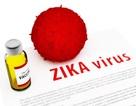 Vắc-xin Zika có thể chống lại tổn thương thần kinh
