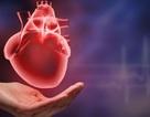 Chế phẩm bổ sung canxi có thể làm tăng nguy cơ tim mạch
