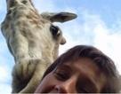 Hươu cao cổ chen vai đòi... selfie cùng du khách