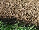 Cảnh báo khả năng đất có thể trở thành một nguồn phát thải CO2 mạnh mẽ
