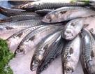 Những lưu ý khi bảo quản và sử dụng cá