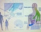 Chất tạo nạc cysteamine độc hại ra sao?