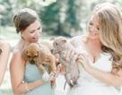 Đám cưới đầy cún con của cặp đôi yêu động vật