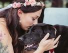 Mang thú cưng hấp hối đến dự đám cưới chị gái