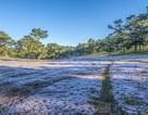 Đến Đà Lạt khám phá đồi cỏ Tuyết tuyệt đẹp