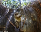 Bộ ảnh tuyệt đẹp về cuộc sống dưới nước vùng đảo Galapagos