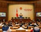 Phê chuẩn 34 cấp phó tại Hội đồng Dân tộc, các Ủy ban của Quốc hội