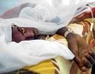Nguy cơ bùng phát đại dịch sốt vàng da trên thế giới