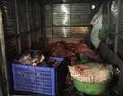 Bắt gần gần 4 tạ thịt lợn không có giấy chứng nhận kiểm dịch