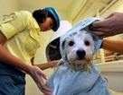 Chăm sóc thú cưng - Ngành công nghiệp tỉ USD tại Hàn Quốc