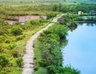 Trải nghiệm vẻ hoang sơ của sông nước ngập mặn ngay gần Thủ đô