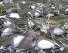 Sét đánh chết hơn 300 con tuần lộc ở Na Uy