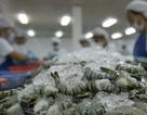 Nghi vấn tôm Ấn Độ đội lốt Việt Nam xuất khẩu vào EU