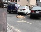 Một người nước ngoài rơi từ tầng 16 chung cư
