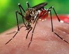 Vi rút Zika có thể sống trong mắt người và gây bệnh về mắt