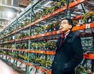 """Đào bitcoin """"ngốn"""" điện nhiều hơn cả lượng điện tiêu thụ của một quốc gia"""