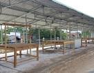 """""""Tai tiếng"""" trong dự án trăm tỷ ở thị xã ven biển Sóc Trăng"""