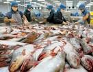 Nhiều lô hàng thủy sản bị cảnh báo vì tồn dư hóa chất kháng sinh