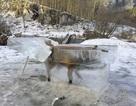 """Phát hiện xác cáo """"đông cứng"""" trong tảng băng trên sông"""
