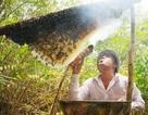 """Mật ong """"U Minh Hạ"""" lại điêu đứng vì bị giả mạo"""