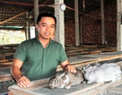 Chàng trai trẻ kiếm trăm triệu đồng mỗi năm từ nghề nuôi thỏ