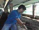 Vượt khó vươn lên từ mô hình nuôi trùn quế khép kín