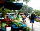 Hội An: Giá cả các loại rau củ tăng mạnh sau lụt