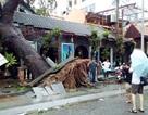 Kêu gọi hỗ trợ khắc phục hậu quả bão số 12 ở một số tỉnh miền Trung