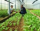 Lão nông bỏ 500 triệu đồng lên núi làm nhà kính trồng rau công nghệ cao