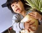 """""""Tận mắt"""" củ cải trắng khổng lồ, to gần bằng em bé!"""