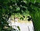 Đi thăm ruộng, tá hỏa phát hiện thi thể trôi sông