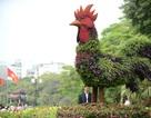 Hà Nội: Ngắm 12 con giáp khủng bằng hoa lập thể